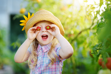 Adorable little girl wearing hat picking fresh ripe organic tomatoes in a greenhouse on warm summer evening Stock Photo