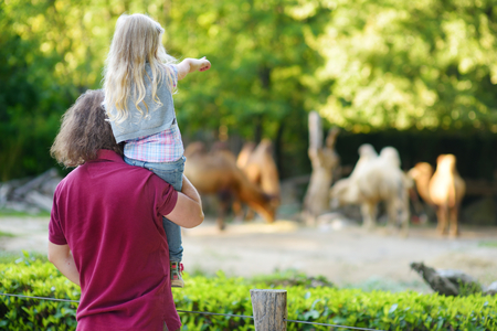 Young father and his little daughter watching camels in the zoo on warm and sunny summer day. Child and parent watching zoo animals standing by the fence.