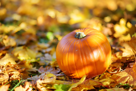 Big orange pumpkin laying on the ground covered with autumn leaves on sunny autumn day Stock Photo