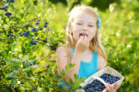 Cute little girl picking fresh berries on organic blueberry farm on warm and sunny summer day. Fresh healthy organic food for small kids.