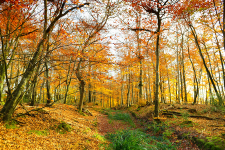 Golden autumn forest of Dartmoor National Park, a vast moorland in the county of Devon, in southwest England. Banco de Imagens