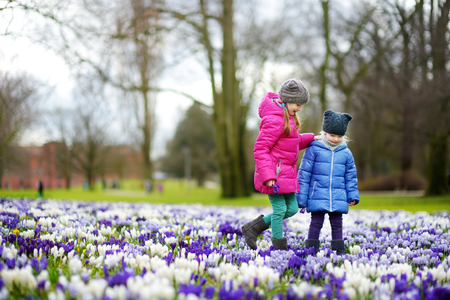 Two little sisters picking crocus flowers on beautiful blooming crocus meadow on early spring. Children having fun together outdoors.