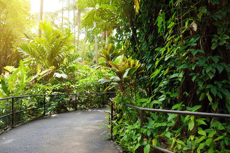 Lush tropical vegetation of the Hawaii Tropical Botanical Garden of Big Island of Hawaii, USA
