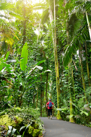 Tourist admiring lush tropical vegetation of the Hawaii Tropical Botanical Garden of Big Island of Hawaii, USA