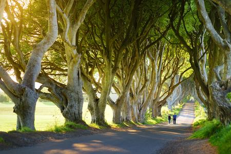 The Dark Hedges, een laan met beukenbomen langs Bregagh Road in County Antrim. Sfeervolle boomtunnel is gebruikt als filmlocatie in populaire tv-series. Toeristische attracties in Noord-Ierland. Stockfoto