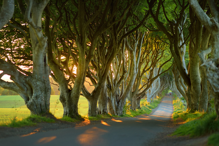 The Dark Hedges, an avenue of beech trees along Bregagh Road in County Antrim. Atmospheric tree tunnel has been used as filming location in popular tv series. Tourist attractions in Nothern Ireland. Archivio Fotografico