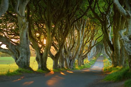 The Dark Hedges, een laan met beukenbomen langs Bregagh Road in County Antrim. Sfeervolle boomtunnel is gebruikt als filmlocatie in populaire tv-series. Toeristische attracties in Noord-Ierland.