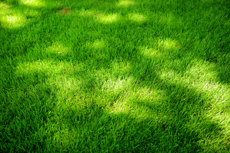 Perfectly mowed fresh garden lawn in summer. Vibrant green grass with sunspots.