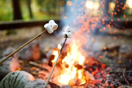 Roasting marshmallows on stick at bonfire. Having fun at camp fire. Camping in fall forest. Archivio Fotografico