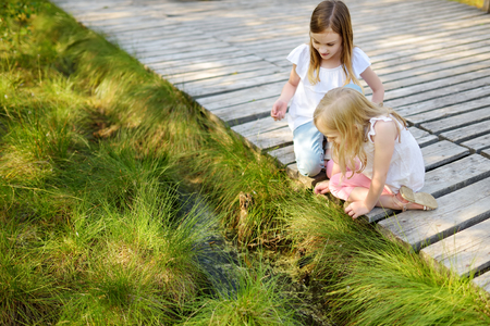 Two adorable young girls catching babyfrogs in summer forest. Children exploring nature.