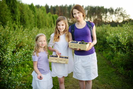 Cute little sisters and their mom picking fresh berries on organic blueberry farm on warm and sunny summer day. Fresh healthy organic food for small kids. Family activities in summer.