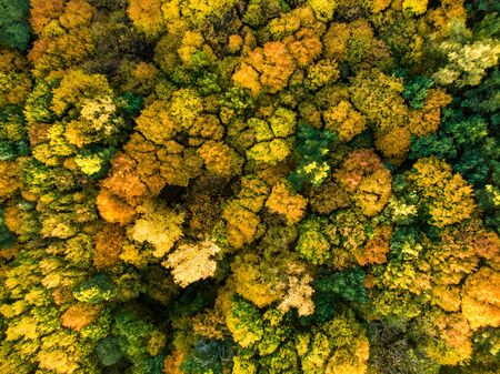Aerial top down view of autumn forest with green and yellow trees. Mixed deciduous and coniferous forest. Beautiful fall scenery in Vilnius city, Lithuania