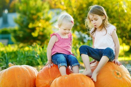 Two little sisters sitting on huge pumpkins on a pumpkin patch. Kids picking pumpkins at country farm on warm autumn day. Family time at Thanksgiving and Halloween.