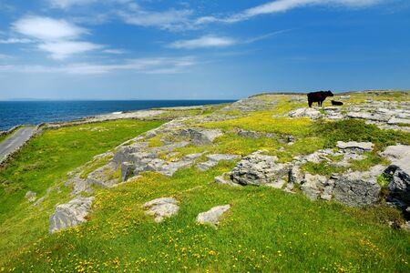 Inishmore oder Inis Mor, die größte der Aran-Inseln in Galway Bay, Irland. Berühmt für seine starke irische Kultur, die Loyalität zur irischen Sprache und eine Fülle vorchristlicher antiker Stätten. Standard-Bild