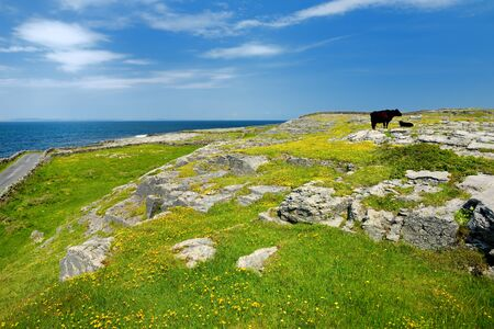 Inishmore or Inis Mor, the largest of the Aran Islands in Galway Bay, Ireland. Famous for its strong Irish culture, loyalty to the Irish language, and a wealth of Pre-Christian ancient sites. Stockfoto