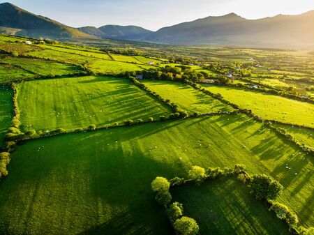 Aerial view of endless lush pastures and farmlands of Ireland. Beautiful Irish countryside with emerald green fields and meadows. Rural landscape on sunset. Stockfoto