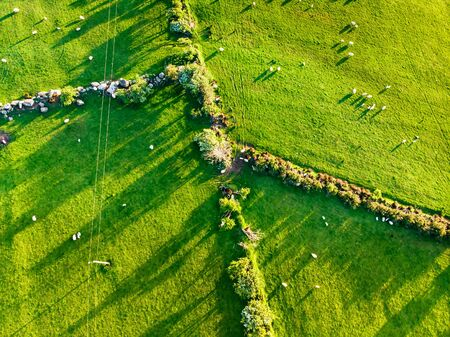 Aerial view of endless lush pastures and farmlands of Ireland. Beautiful Irish countryside with emerald green fields and meadows. Rural landscape on sunset. Stock Photo