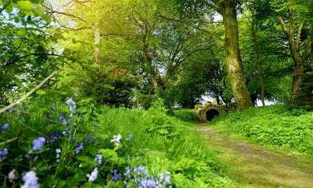Beautiful bluebell flowers blossoming in the gardens of Ducketts Grove, a ruined 19th-century great house and former estate in County Carlow, Ireland.