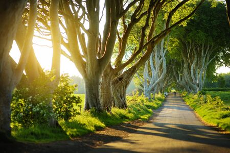 The Dark Hedges, an avenue of beech trees along Bregagh Road in County Antrim. Atmospheric tree tunnel has been used as filming location in popular tv series. Tourist attractions in Nothern Ireland. Standard-Bild - 128291263