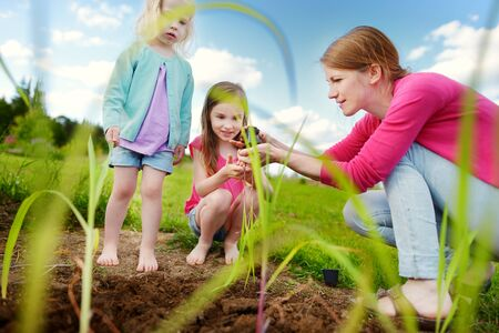 Two cute little sisters helping their mother to plant seedlings in a garden. Children taking part in outdoor household chores. Active family leisure at spring.