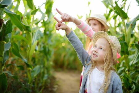 Two cute young girls having fun in a corn maze field during autumn season. Games and entertainment during harvest time. Active family leisure with kids.