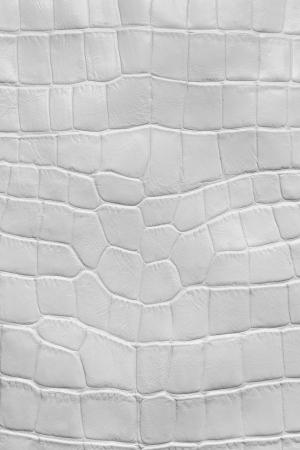 crocodile skin leather: White crocodile leather texture, macro  Stock Photo
