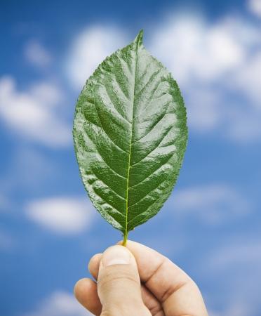 Fresh green leaf in hand, blue sky on background