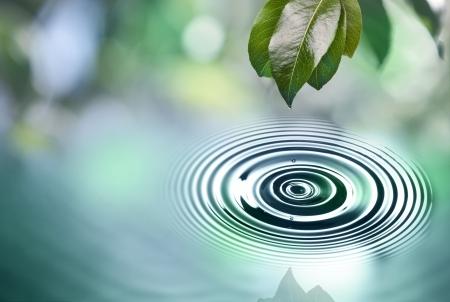 Les feuilles vertes avec goutte d'eau au-dessus de l'eau