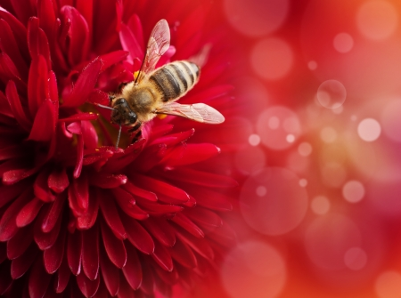 Flower with bee , defocused lights on background photo