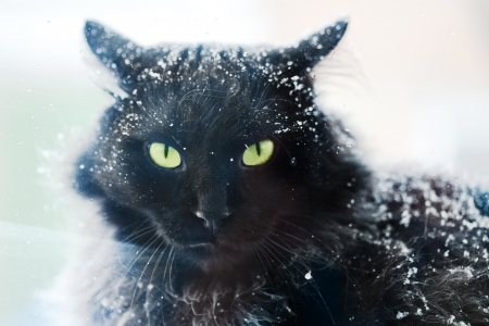 Snow covered black cat photo