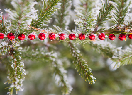 colden: Christmas decorations on the frozen branches of a coniferous tree  Stock Photo