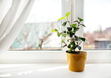 Decorative flowers in flowerpot on windowsill photo
