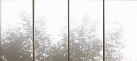 through window: Plants shadows through window