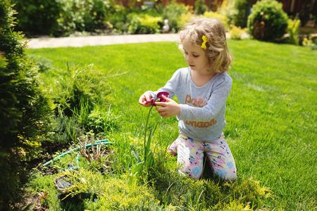 girl holding flower: Little girl holding flower, summer outdoor