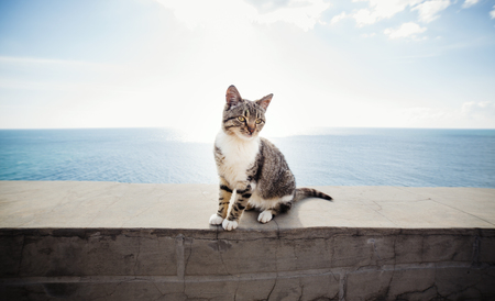 blue sea: Cat on the pier near the sea