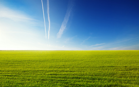 land plant: Green field on a background of the blue sky Stock Photo