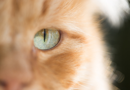 macro   photo: Ginger cat, macro photo Stock Photo