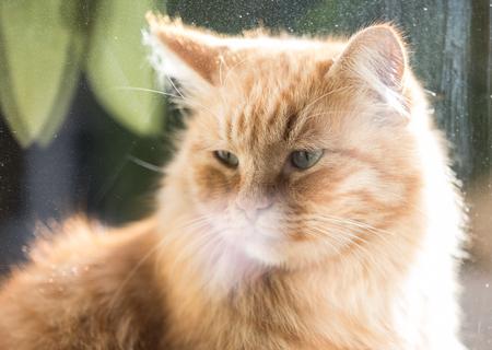 ginger cat: Ginger cat, macro photo Stock Photo
