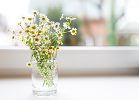 sill: Bouquet of chamomiles flowers on the window sill