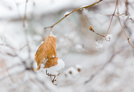 Frozen plants in winter with the hoar-frost Stock Photo