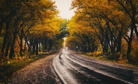 Autumn landscape with road and beautiful colored trees. Stock Photo
