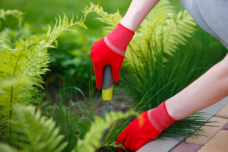 Photo of gloved woman hands with tool removing weed from soil
