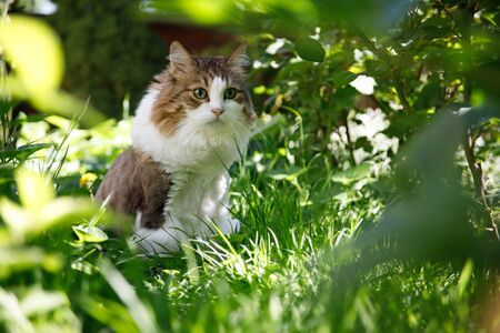 Cat in the home garden outdoor