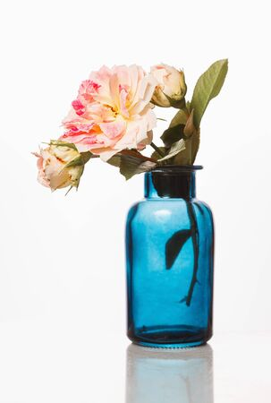 Blue glass bottle with rose essential oil and pink roses on white background. Aromatherapy