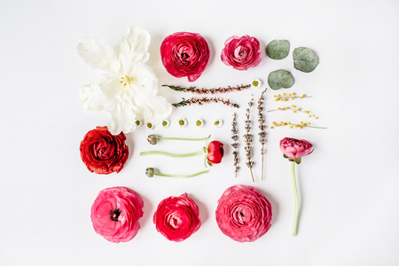 Pink and red roses or ranunculus, white tulip and green leaves on white background. Flat lay, top view