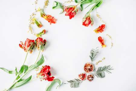 wreath frame with red and white roses, ranunculus and tulips and oranges isolated on white background. flat lay, overhead view
