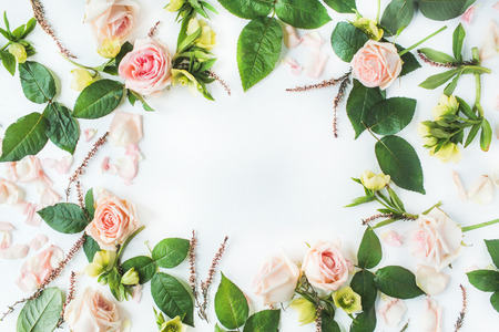 frame with pink roses, branches, leaves and petals isolated on white background. flat lay, overhead view