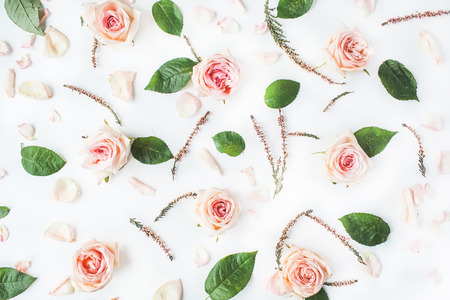 Wallpaper, texture. Pink roses on white background. Flat lay, top view Zdjęcie Seryjne