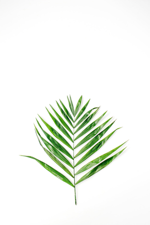 lone palm branch isolated on white background. flat lay, top view