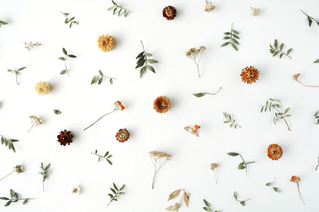 黄色の乾燥花、枝、葉し、白い背景の上に花びらパターンが分離されました。フラット レイアウト、オーバーヘッドの表示 写真素材